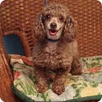 Adopt A Pet :: Hershey - Tulsa, OK