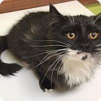Adopt A Pet :: Riu - Buhl, ID