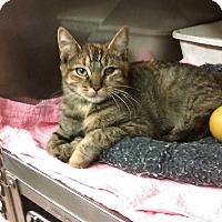 Adopt A Pet :: jomay - Whitestone, NY