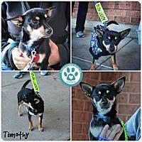 Adopt A Pet :: Timothy - Kimberton, PA