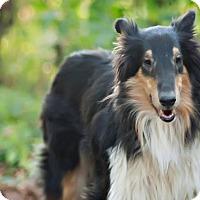 Adopt A Pet :: Sabrina - Prospect,, KY