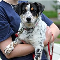 Adopt A Pet :: Copley - Charlottesville, VA