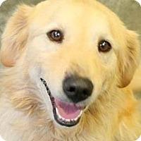 Adopt A Pet :: GRADY(LOST HIS FAMILY-PLS READ - Wakefield, RI