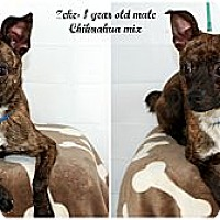 Adopt A Pet :: Zeke - Evansville, IN