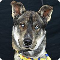 Adopt A Pet :: Sherman - Plano, TX