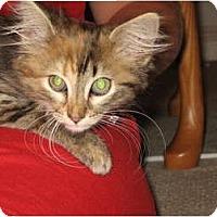Adopt A Pet :: Skye - Wakinsville, GA