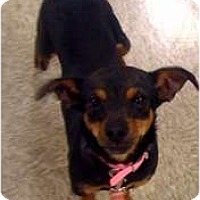 Adopt A Pet :: Minnie - Fowler, CA