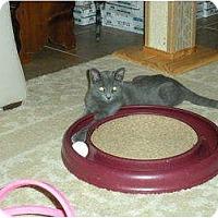 Adopt A Pet :: Rascal - Huffman, TX