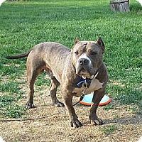 Adopt A Pet :: Romeo - Milwaukee, WI