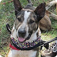 Adopt A Pet :: Jerri - West Bridgewater, MA