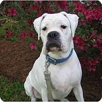 Adopt A Pet :: Zsa Zsa - Thomasville, GA