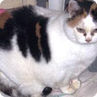 Adopt A Pet :: Sweet Williams - Alden, IA