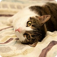 Adopt A Pet :: Skippy - Plain City, OH