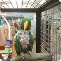 Adopt A Pet :: Loot - Villa Park, IL