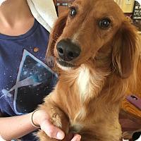 Adopt A Pet :: Boodrow - Cumberland, MD