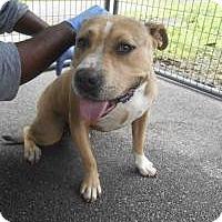 Adopt A Pet :: Bubba - Bartonsville, PA