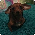 Adopt A Pet :: Squirt