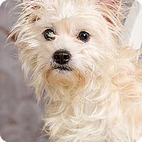 Adopt A Pet :: Thomas - Owensboro, KY