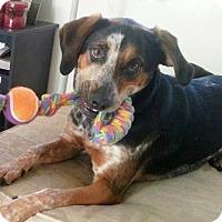 Adopt A Pet :: Skylar - Tucson, AZ