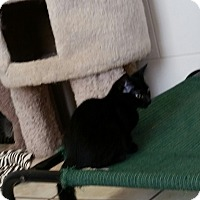 Adopt A Pet :: Barella - Chippewa Falls, WI
