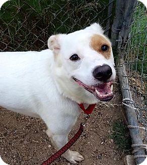 Border Collie Mix Dog for adoption in Austin, Texas - Desiree