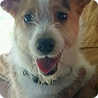 Adopt A Pet :: Cocoa Pebbles - Pembroke, GA