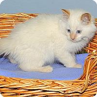 Adopt A Pet :: Howard - Gatineau, QC