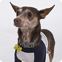 Adopt A Pet :: Robert Browning - Beverly Hills, CA