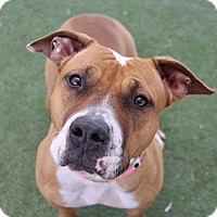 Adopt A Pet :: A930617 is at Las Vegas - Beverly Hills, CA