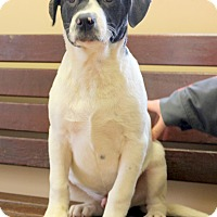 Adopt A Pet :: Wally~adopted! - Glastonbury, CT