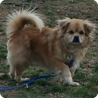 Adopt A Pet :: Hamilton NJ - Benny - New Jersey, NJ