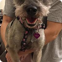 Adopt A Pet :: Mia - Windermere, FL