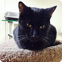 Adopt A Pet :: Maurice - Monroe, GA