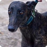 Adopt A Pet :: Pamela - Pearl River, LA