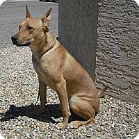 Adopt A Pet :: Breezy - Wickenburg, AZ