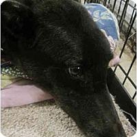 Adopt A Pet :: Heidi (Heidi Hipps) - Chagrin Falls, OH