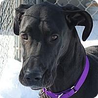Adopt A Pet :: Dahlia - Woodstock, IL