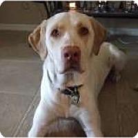 Adopt A Pet :: Baxton - Only $55 adoption fee - Litchfield Park, AZ