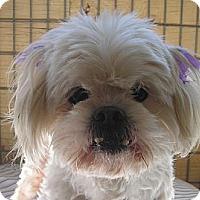 Adopt A Pet :: Midge - Acton, CA