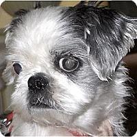 Adopt A Pet :: Emmy-NJ - Mays Landing, NJ