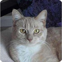 Adopt A Pet :: Sabrina - crofton, MD