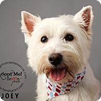 Adopt A Pet :: Joey-adoption pending - Omaha, NE