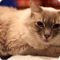 Adopt A Pet :: Ava - Sacramento, CA