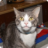 Adopt A Pet :: Alec - Medina, OH