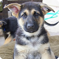Adopt A Pet :: Gideon von Gretchen - Thousand Oaks, CA