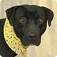 Adopt A Pet :: Eight - Cincinnati, OH