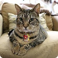 Adopt A Pet :: Ellie - Greensboro, GA