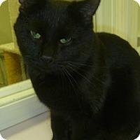 Adopt A Pet :: Kazia - Hamburg, NY