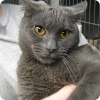 Adopt A Pet :: Elsa - Voorhees, NJ