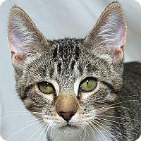 Adopt A Pet :: Thelma BB - Sacramento, CA